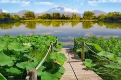 Um lago com uma ponte nos arvoredos dos lótus fotografia de stock royalty free