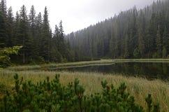 Um lago da montanha A névoa nas montanhas, cenário nevoento da manhã fantástica, montes cobriu a floresta da faia, Ucrânia, Carpa imagem de stock royalty free