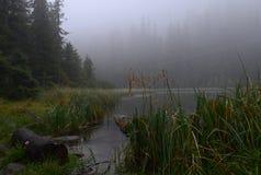 Um lago da montanha A névoa nas montanhas, cenário nevoento da manhã fantástica, montes cobriu a floresta da faia, Ucrânia, Carpa fotografia de stock