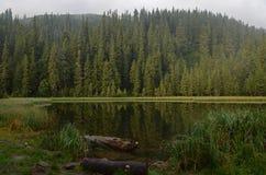 Um lago da montanha A névoa nas montanhas, cenário nevoento da manhã fantástica, montes cobriu a floresta da faia, Ucrânia, Carpa foto de stock