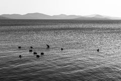 Um lago no por do sol, com alguns patos na água e nos montes distantes Imagens de Stock Royalty Free
