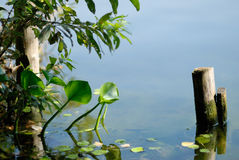 Um lago pequeno Foto de Stock