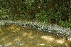 um lago pequeno com uma carpa japonesa fotografia de stock