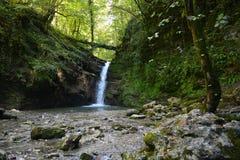 Um lago pequeno na floresta fotos de stock royalty free