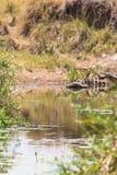 Um lago pequeno no Masai Mara, Kenya fotografia de stock