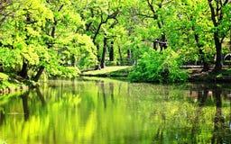 Um lago pequeno no parque da cidade Foto de Stock