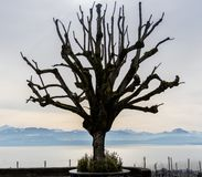 Um lago só artístico Genebra da árvore e cumes suíços imagens de stock