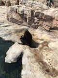 Um leão de mar que dirige acima fotografia de stock royalty free