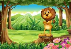 Um leão irritado que está acima do coto na floresta ilustração royalty free