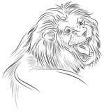 Um leão que ruje ilustração stock