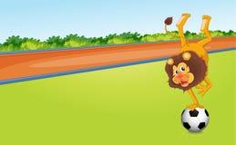 Um le?o e uma bola Foto de Stock Royalty Free