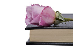 Um livro e uma rosa. Foto de Stock Royalty Free