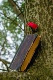 Um livro velho ajustado em um ramo, uma rosa vermelha próximo foto de stock