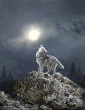Um lobo urra à lua Foto de Stock Royalty Free