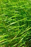 Selva do verde Foto de Stock Royalty Free