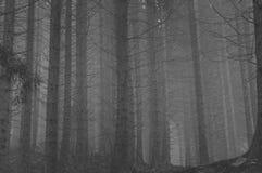 Um lugar bonito em montanhas rmaonian Fotografia de Stock Royalty Free