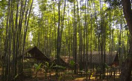 Um lugar escondido na selva Fotos de Stock