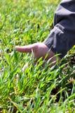 Um método inovativo de crescer o trigo da grão, feijões de soja, milho han fotos de stock royalty free