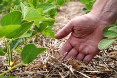 Um método inovativo de crescer o trigo da grão, feijões de soja, milho han fotografia de stock