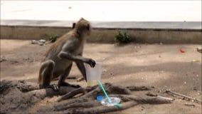 Um macaco filme