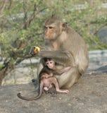 Um macaco com seu bebê Imagem de Stock Royalty Free