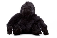 Um macaco do luxuoso Fotografia de Stock