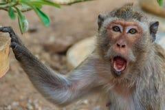 Um macaco irritado quando foi perturbado pelo ser humano fotos de stock