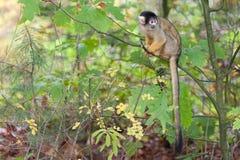 Um macaco no jardim zoológico fotos de stock royalty free