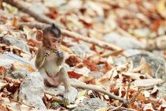 Um assento pequeno do macaco Imagens de Stock