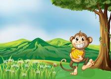 Um macaco que guardara uma banana Foto de Stock Royalty Free