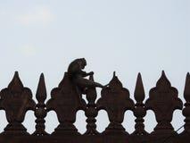 Um macaco que senta-se em uma parede fora de Taj Mahal em Agra, Índia imagens de stock royalty free