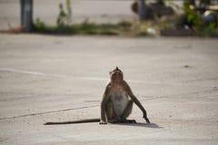 Um macaco que senta-se na rua imagens de stock