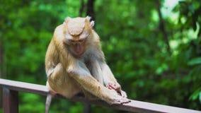 Um macaco selvagem senta-se nos trilhos no parque O habitat natural dos animais video estoque