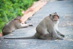 Um macaco senta-se na estrada e no olhar em mim Imagens de Stock Royalty Free