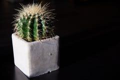 Um mammillaria bonito do cacto no potenci?metro de flor na tabela fotografia de stock royalty free