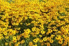 Um mar de flores amarelas Imagens de Stock Royalty Free