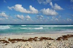 Um mar verde Imagem de Stock Royalty Free