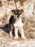 Filhote de cachorro pequeno na neve imagens de stock
