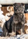 Filhote de cachorro pequeno na neve fotos de stock royalty free