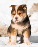 Filhote de cachorro pequeno na neve imagens de stock royalty free