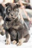 Filhote de cachorro pequeno na neve imagem de stock royalty free
