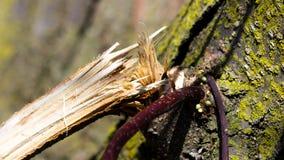 Um membro de árvore quebrado após uma tempestade Fotos de Stock Royalty Free