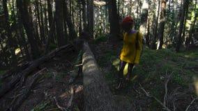 Um menina-fotógrafo saudável ativo do moderno com uma câmera em suas mãos anda com a baixa chave 60 FPS da floresta lenta video estoque