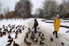 Um menino alimenta patos selvagens na neve perto de um canal congelado no microdistrict Vostok foto de stock