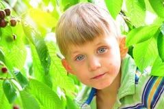 Um menino ativo e alegre recolhe e come cerejas em uma árvore Imagem de Stock Royalty Free