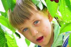 Um menino ativo e alegre recolhe e come cerejas em uma árvore Fotos de Stock