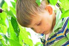 Um menino ativo e alegre recolhe e come cerejas em uma árvore Fotografia de Stock