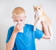 Um menino com alergia de gato Foto de Stock Royalty Free