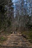 Um menino com uma bicicleta que joga em uma estrada de floresta foto de stock royalty free