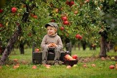 Um menino de sorriso pequeno em um pomar de maçã senta e guarda uma maçã foto de stock